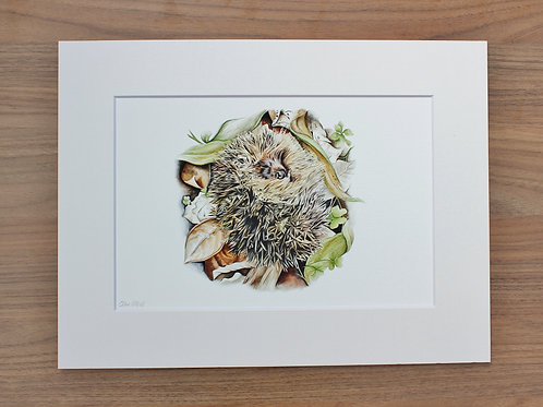 "Hedgehog - ""Hibernate"" - Art Print - Mounted"