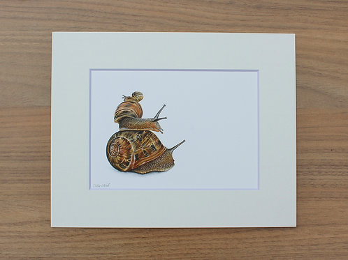 "Snails - ""Three's a Crowd"" - Art Print - Mounted"