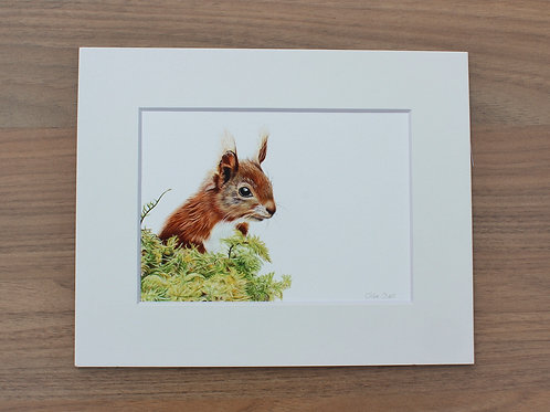 "Squirrel - ""Simply Red"" - Art Print - Mounted"