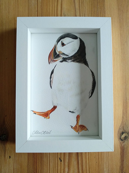 Framed 6x4 Puffin Print
