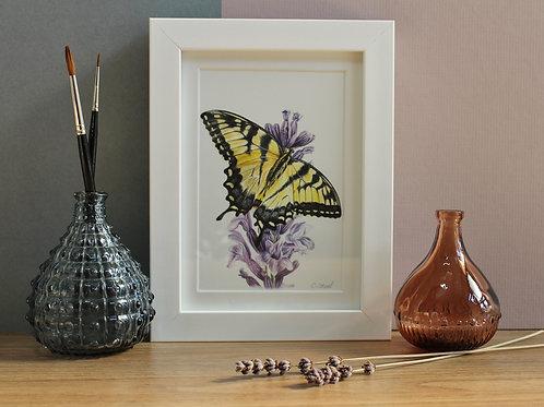 Butterfly Art Print - Framed