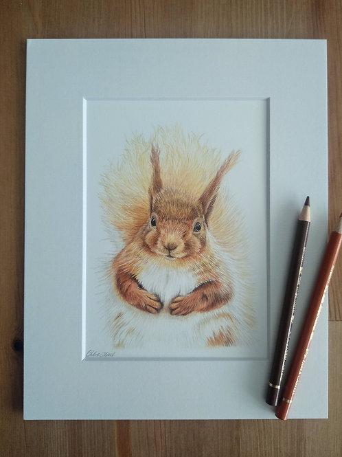 "Red Squirrel - ""Chestnut"" - Original - Mounted"