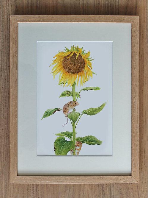 """Harvest Mice - """"Race to the top"""""""
