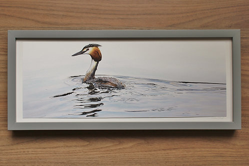 "Great Crested Grebe - ""Passing By"" - Art Print - Framed"