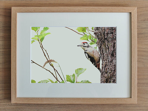 "Woodpecker - ""Spotted"" - Art Print - Framed"