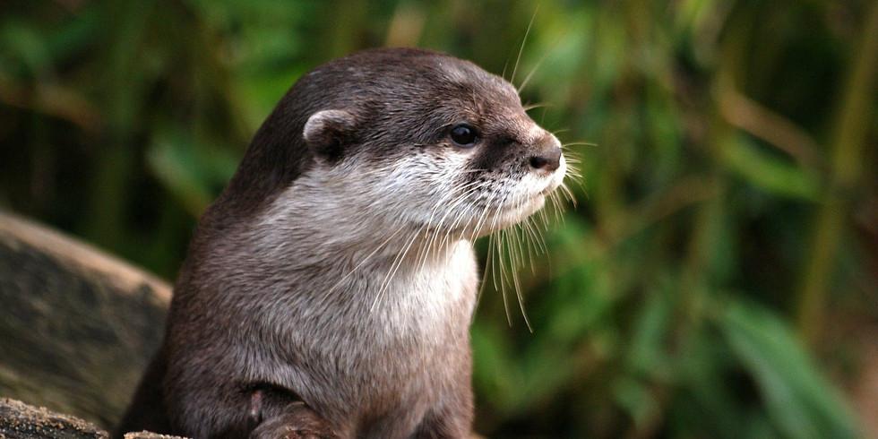 Otter Watercolour Workshop