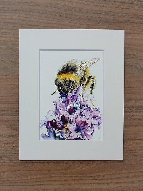 "Bumblebee - ""Lavender"" - Art Print - Mounted"