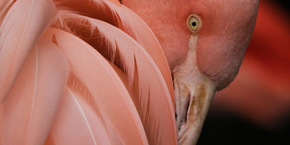 Colourful Flamingo Watercolour Art Workshop - Part 2