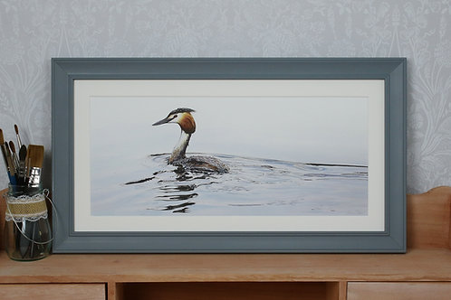 """Great Crested Grebe - """"Passing By"""""""