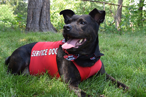 Red - Service Dog Suit