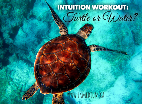 Intuition workout: turtle or water?