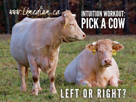 Intuition Workout: Pick a Cow.