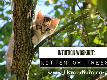 Intuition workout: kitten or trees