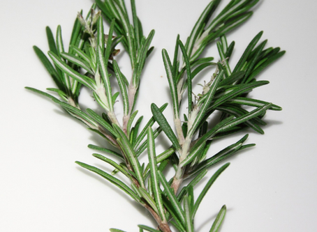 Healing with Rosemary