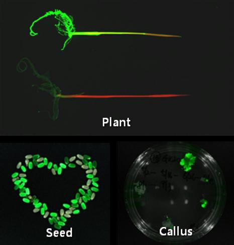 Fluorescence In Vivo Imaging