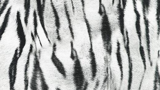Tiger - Snow from Animal Kingdom
