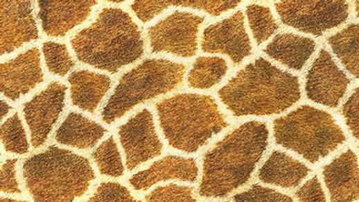 Giraffe - Wild from Animal Kingdom
