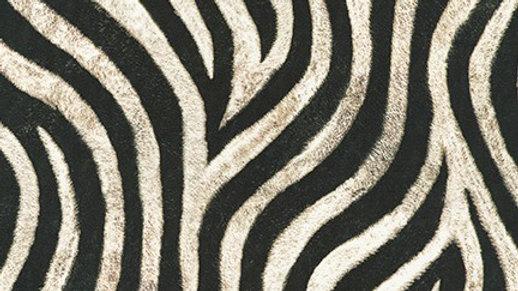 Zebra - Wild from Animal Kingdom