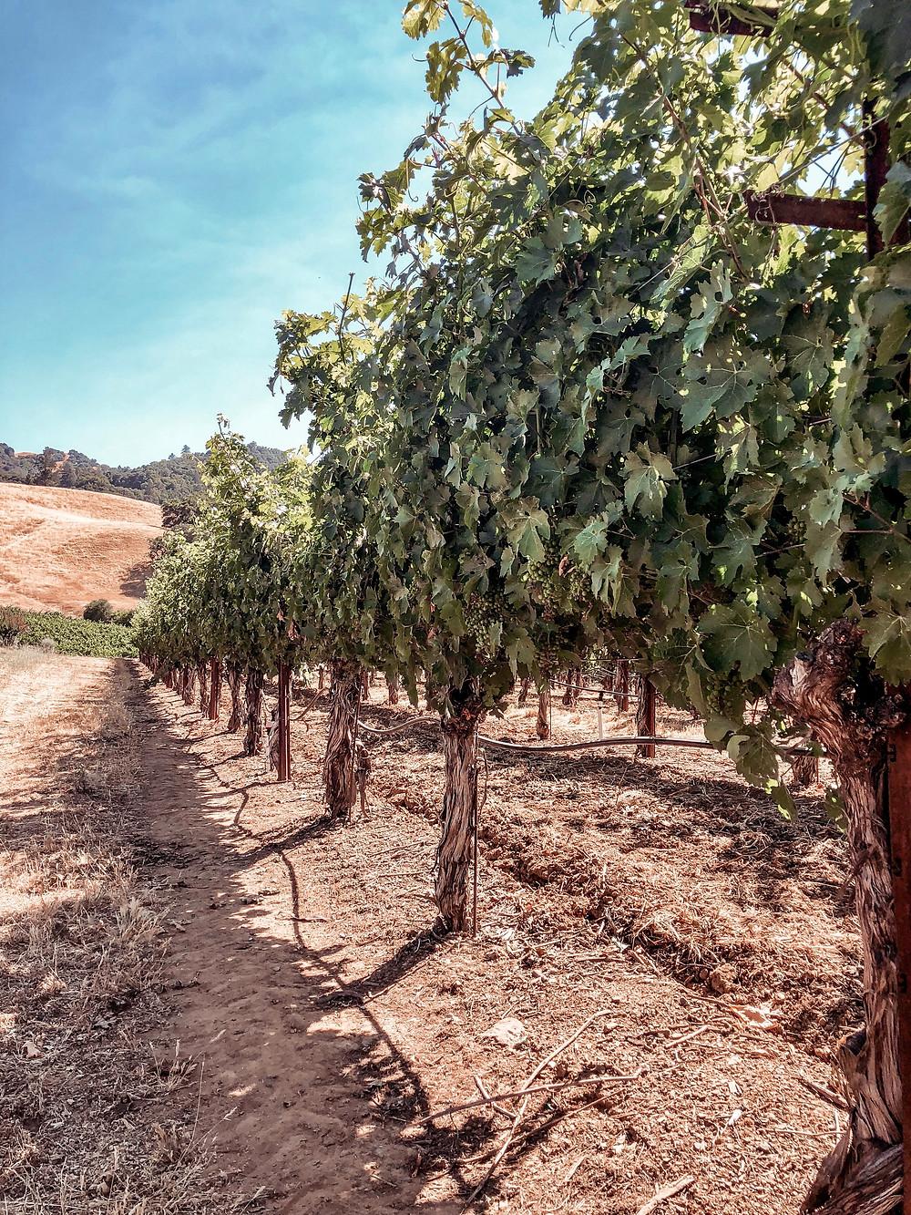 Sonoma Grape Girl, Audra Tavelli, alexander valley, experience alexander valley, sonoma county, sonoma county wine event, healdsburg event, healdsburg wine event, sonoma county blogger, alexander valley wine tasting, alexander valley wineries