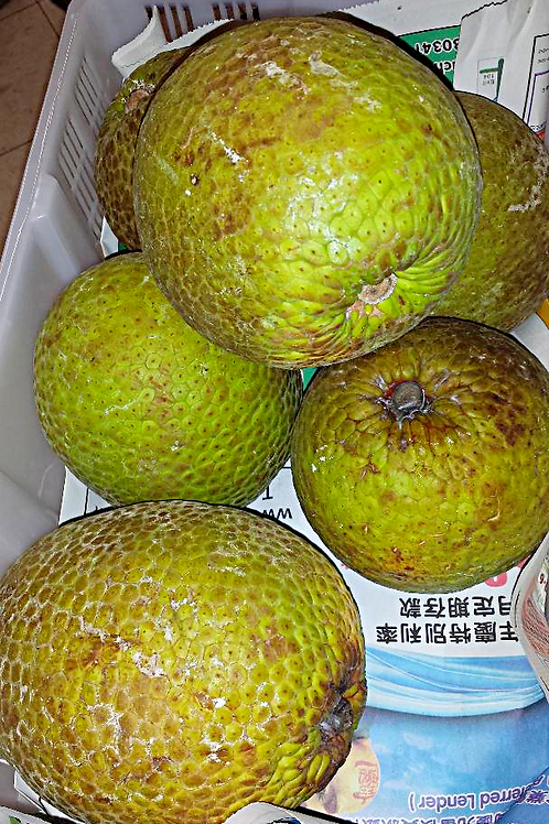 Fresh Bread Fruit (Mahi) sell by weight, no mail ordering.