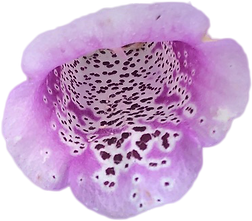purp flower 2.png