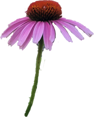 purpleflower.png