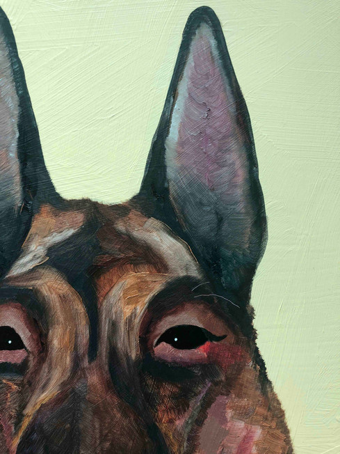 Dogs close up 4