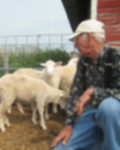 grandpa sheep.jpeg
