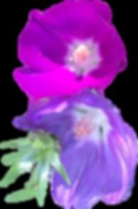 purple flower 1.png