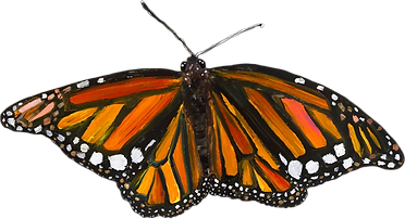 monarch1.png