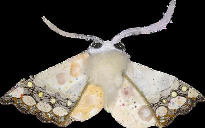 Moth_edited.png