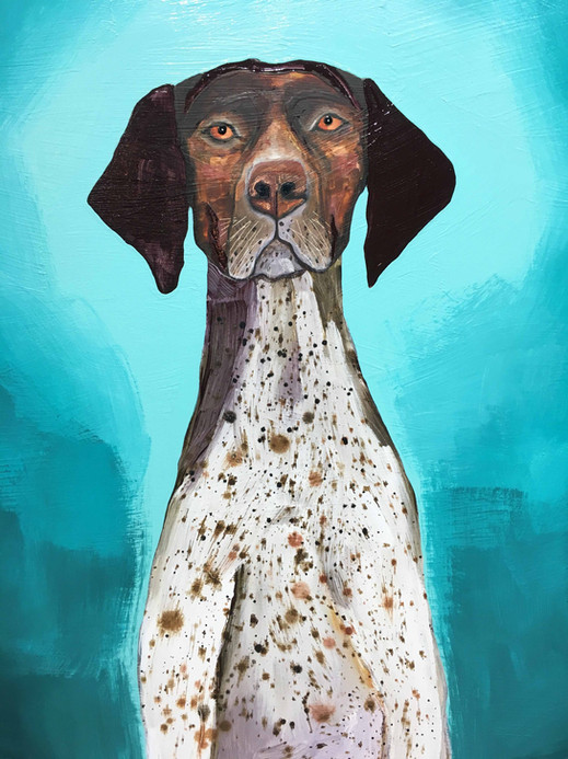 German Shorthaired Pointer close up 5