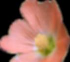 littleredflower.png
