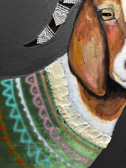 Boer Goats In Sweaters Close Up 3