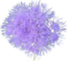 purplefuzzyflower.png
