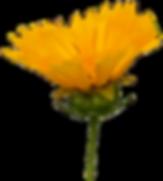 yellowflowersvan3.png