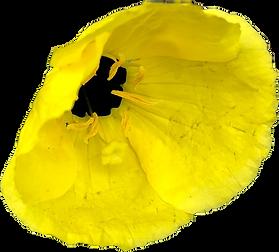 yellowflower.png