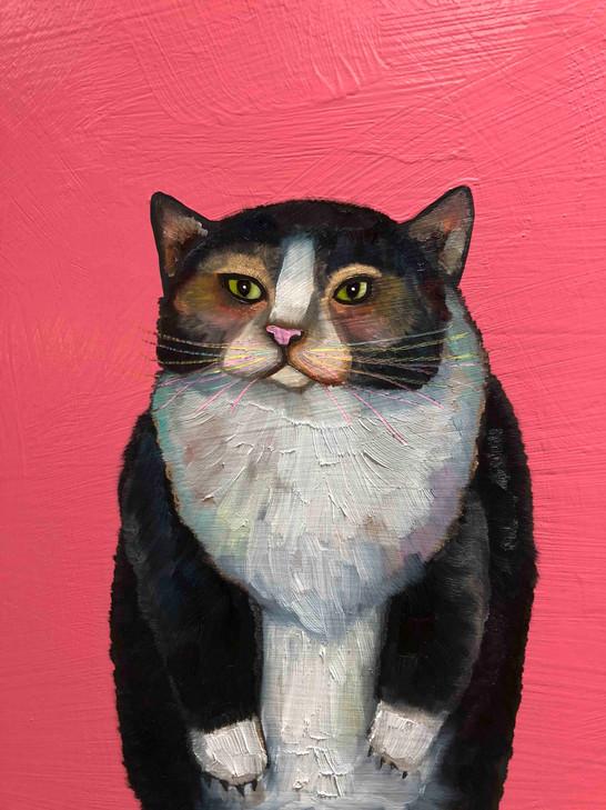 Cats close up 3