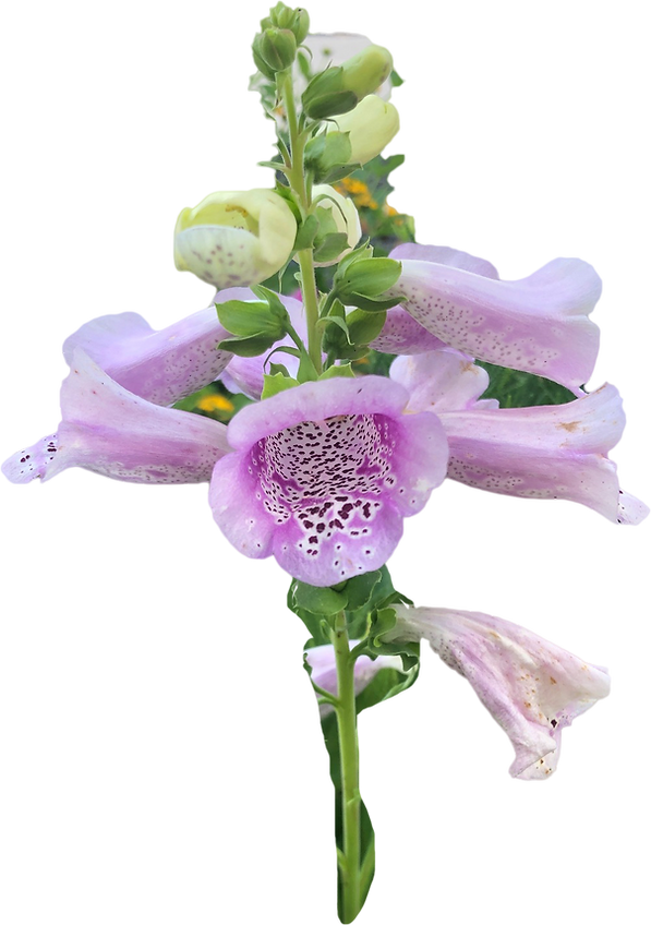 purp flower 1.png