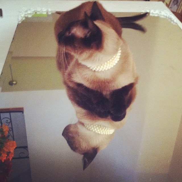 And mirrors #siamese