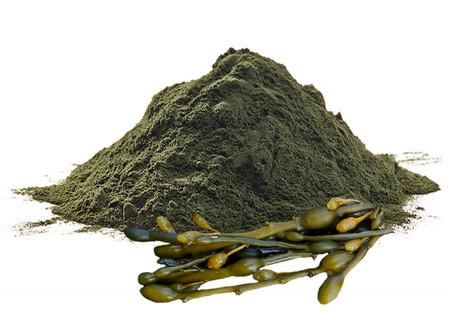 L'Ascofillo, un'alga molto utile per i pelosetti