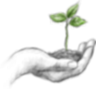 main-plante.png