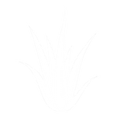 Logo Illustration Aromathérapie - La clé