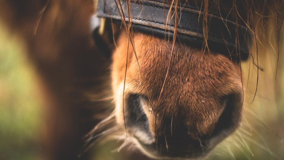Pony im Waldorfkinderhaus