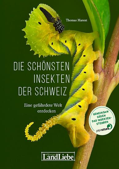 Die schönsten Insekten der Schweiz