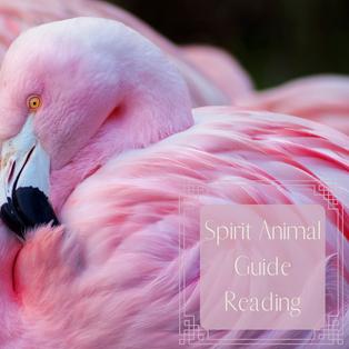 Spirit Animal Guide Reading