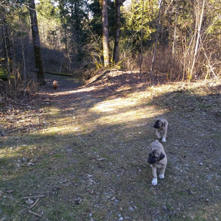 Hiking on the Property