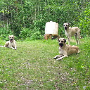 Riddick, Shep and Lumen.jpg