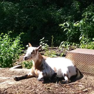 Tilly enjoying some sun.jpg