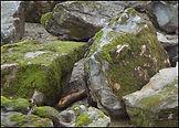 Moss Boulders.jpg